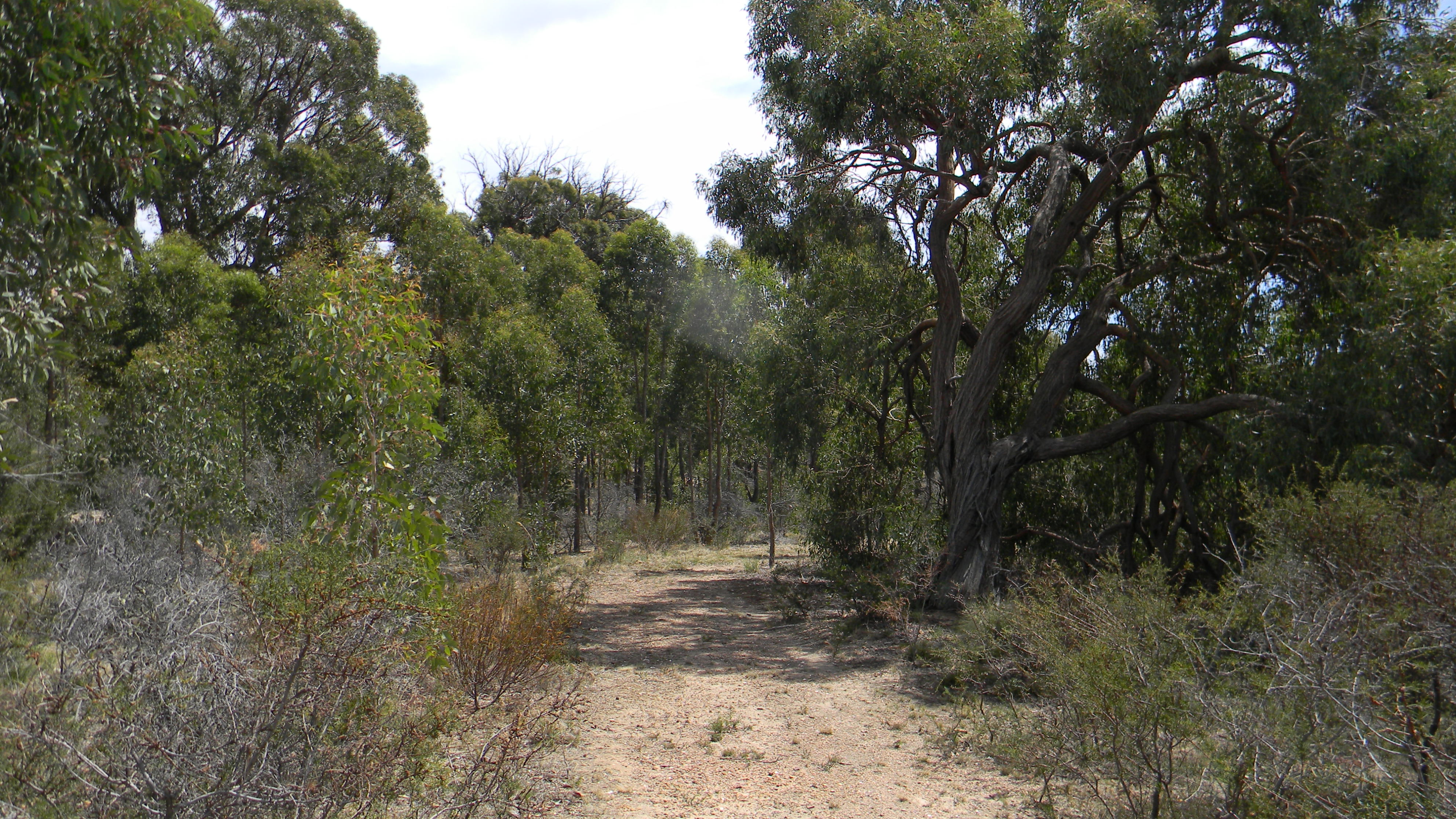 Northside Nudist Club Nude Bush Walking Track Victoria Melbourne Family. Nudism / naturism in central victoria near melbourne